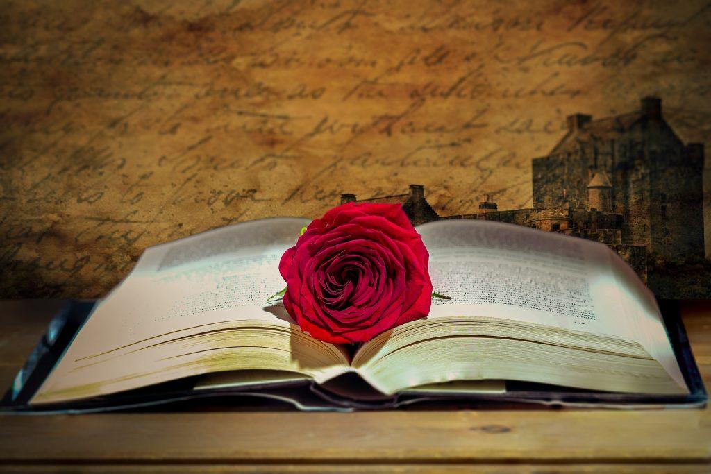 sant jordi, 2021, rosa, llibre